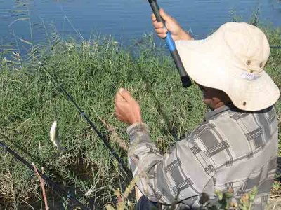 Фото - отчёт о рыбалке на сбросовом канале в голодной степи