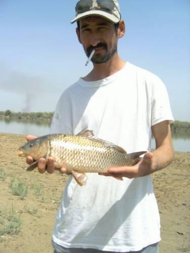 Усач на шурузяке